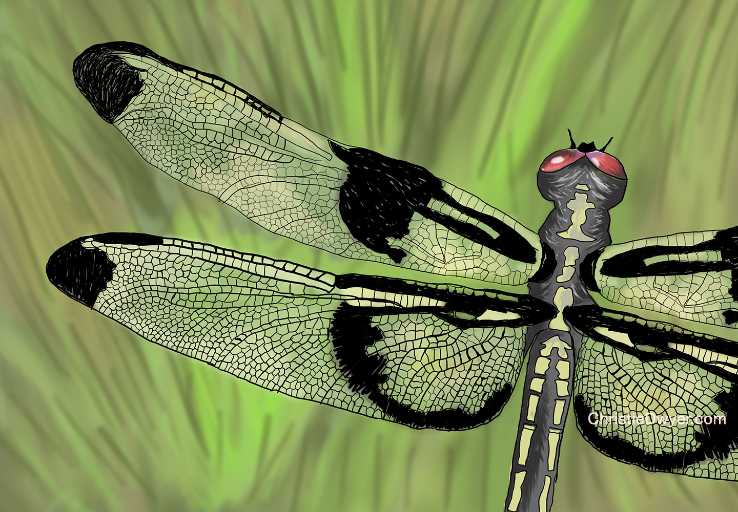 drawing_dragonfly